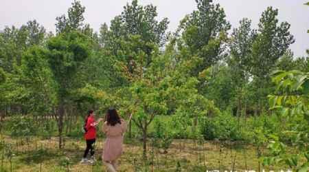 北京企业养老退休