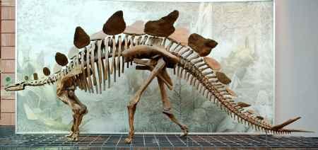 四川恐龙骨架模型销售